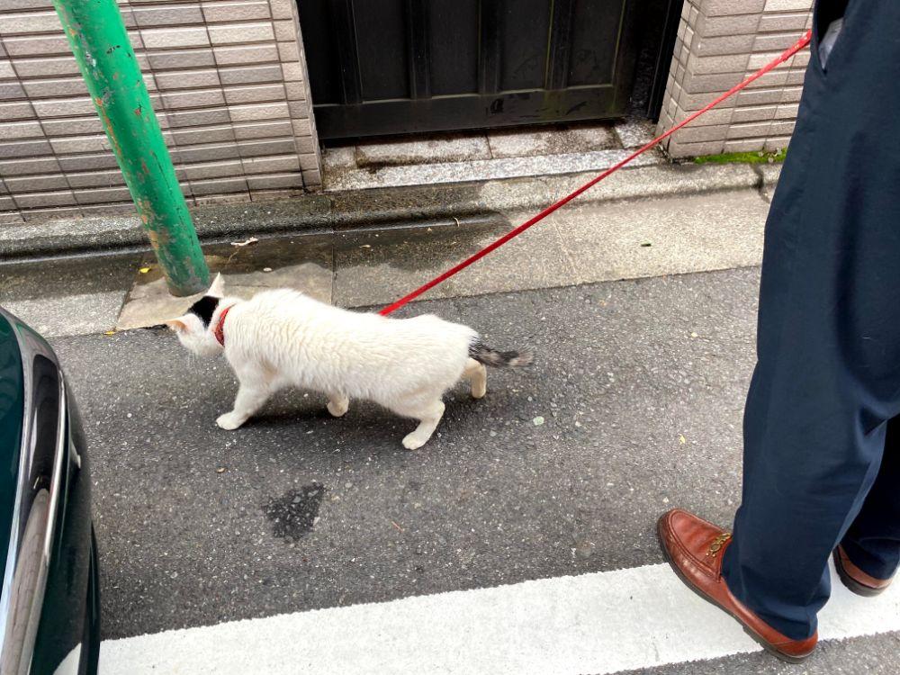 猫の次郎長お散歩