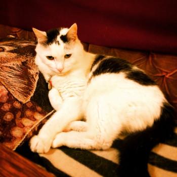 猫の五右衛門