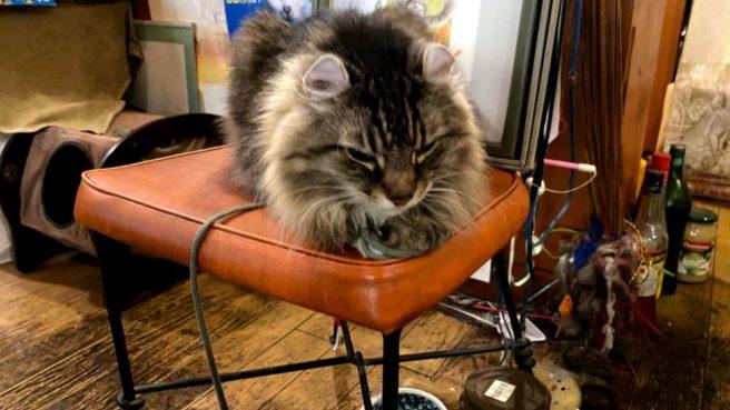 看板猫ケーニッヒ