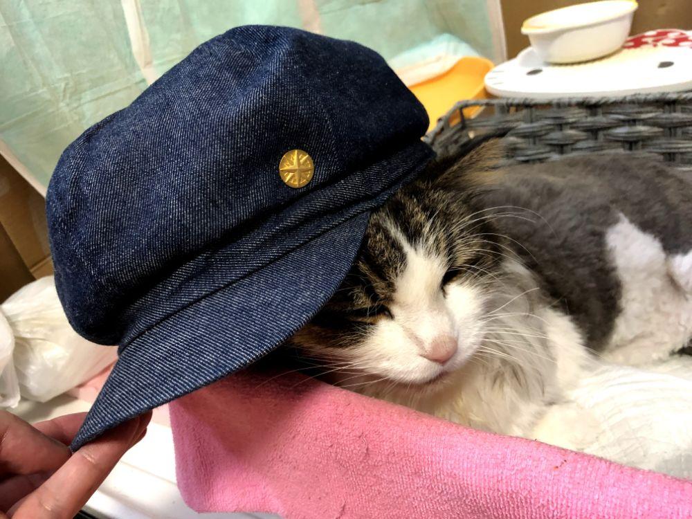 バッジつき帽子をかぶるイエモン