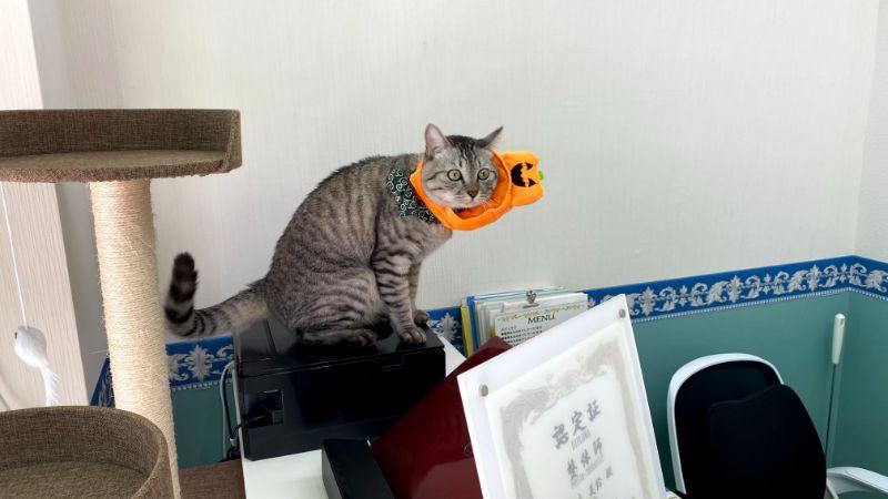 猫のHaku