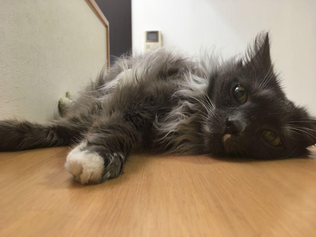 猫のゴエモン